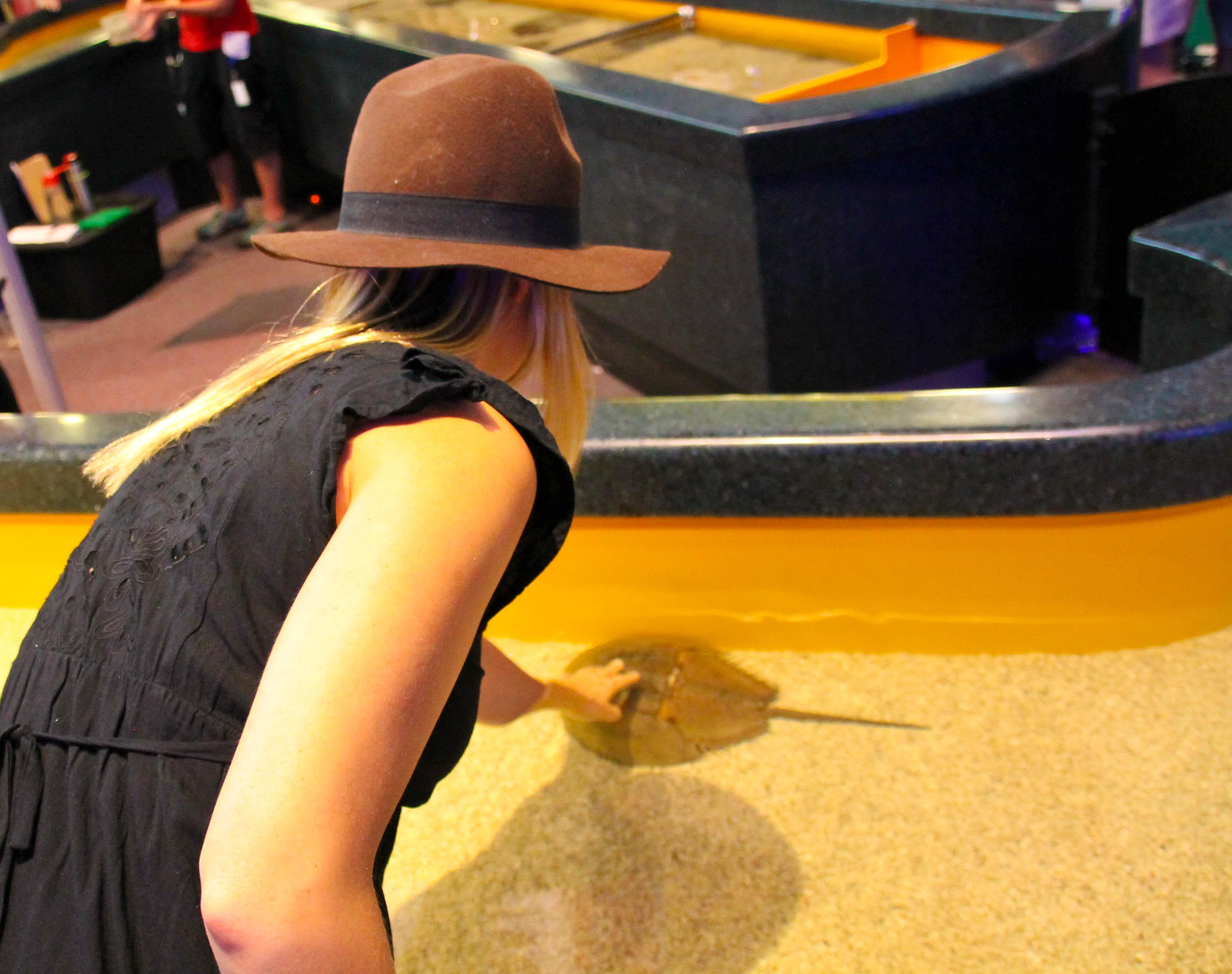 toronto aquarium 1