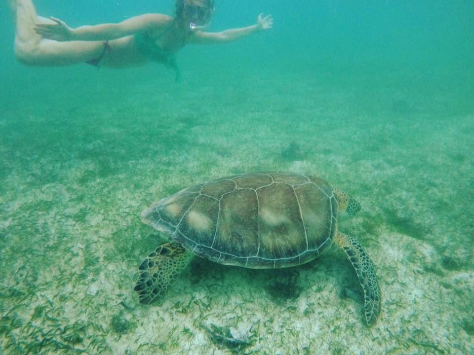 Akumal giant turtles - the pink backpack
