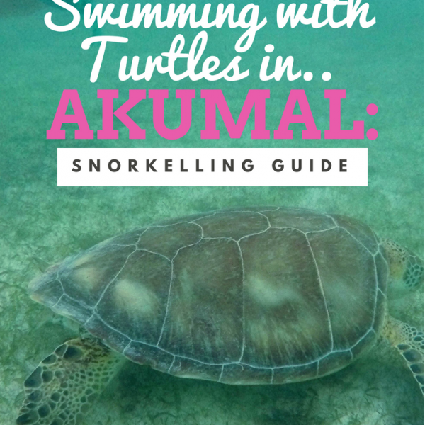 swimming with turtles in Akumal Mexico