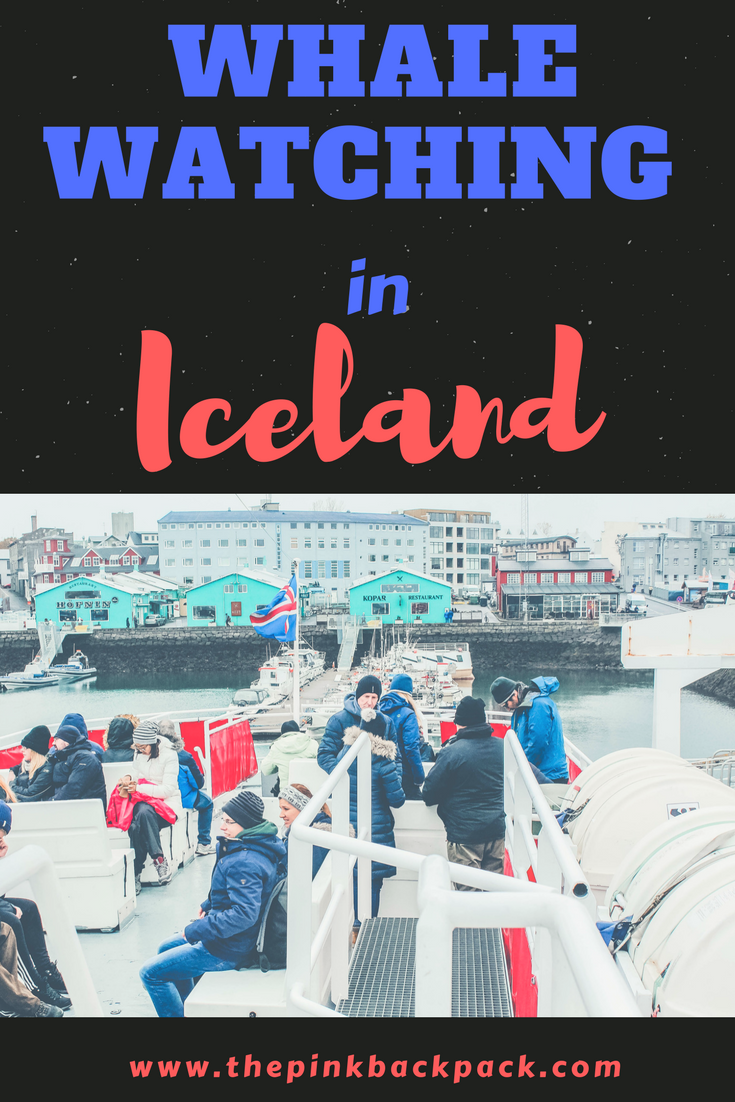 Whale watching in Reykjavik - the pink backpack blog