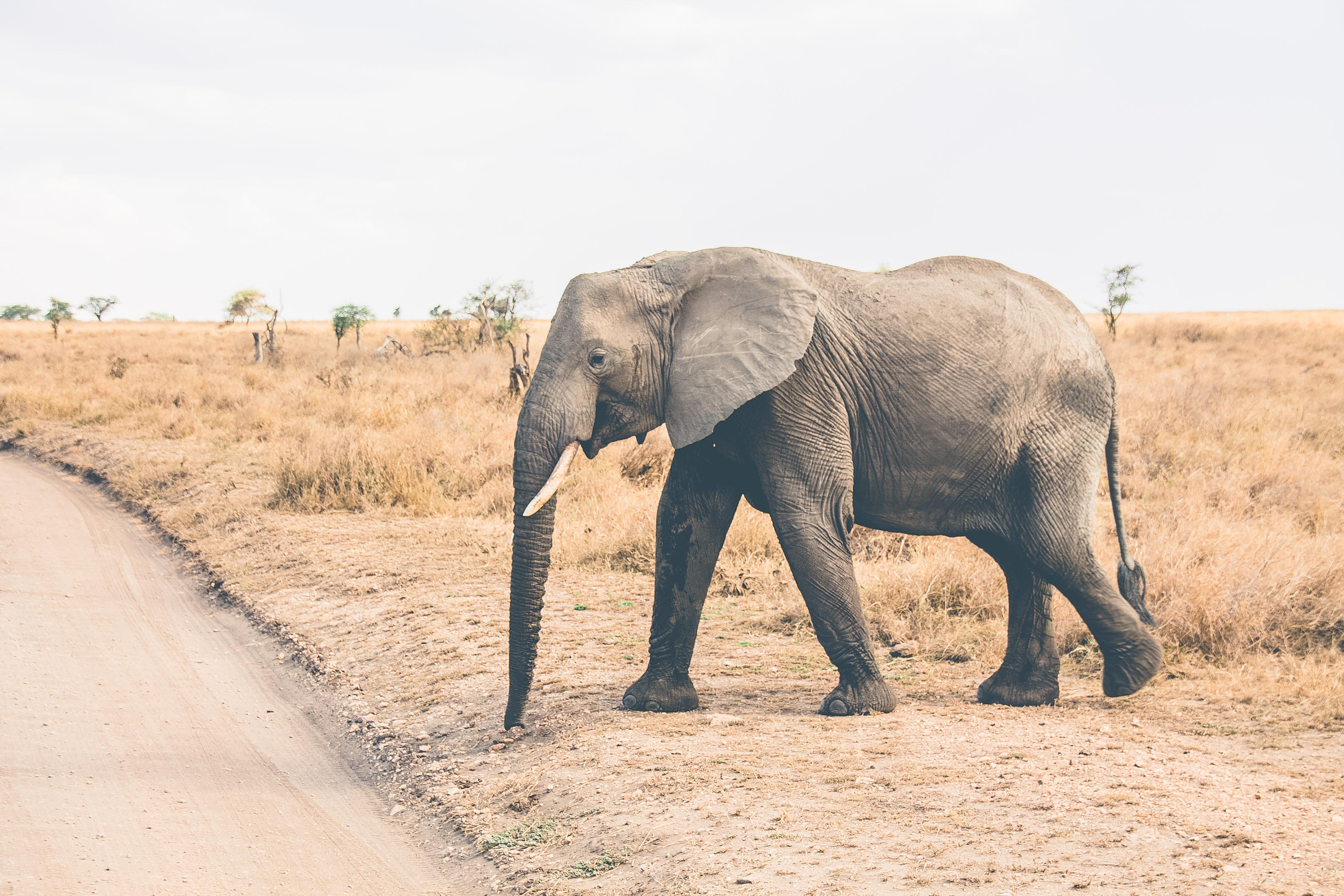serengeti safari itinerary